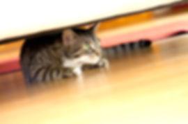 anxious-cat.jpg