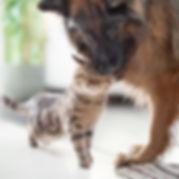 shutterstock_1350945833 dog cat love.jpg
