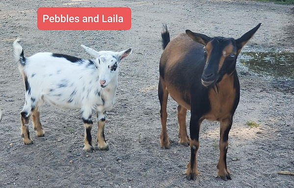 nigerian Laila and Pebbles.jpg