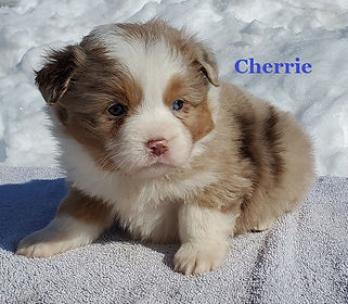 Cherrie3.jpg