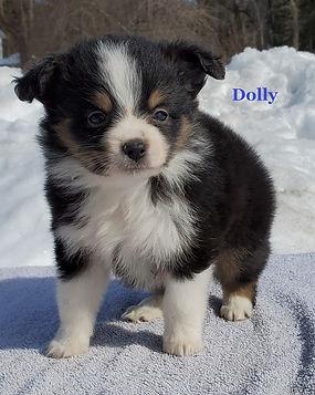 Dolly2.jpg