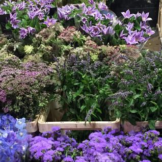 NYC Flower Market