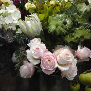 Kira Garden Rose