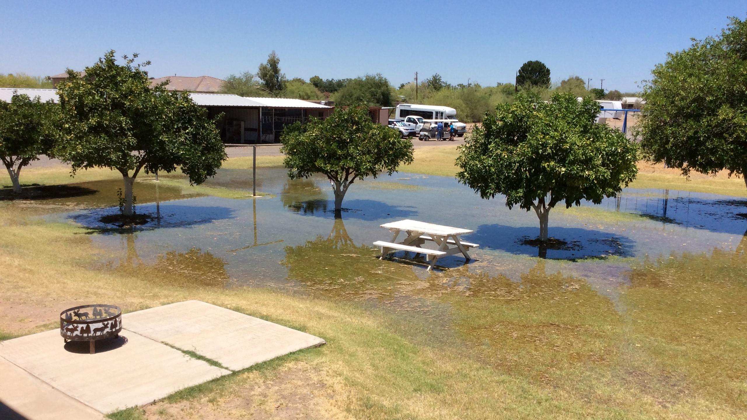FloodedLawnApt