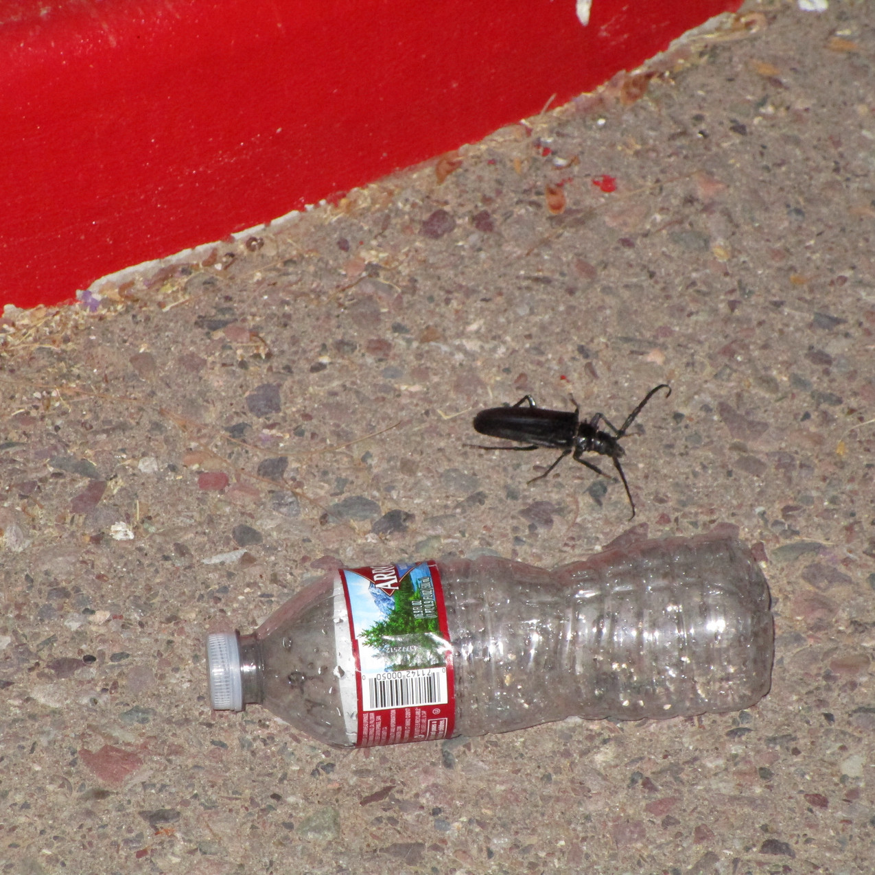 Beetle next to bottle