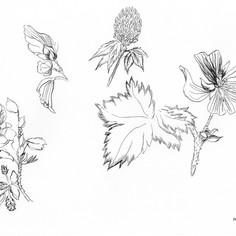 floral.01.jpg