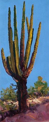 Cactus - 3092