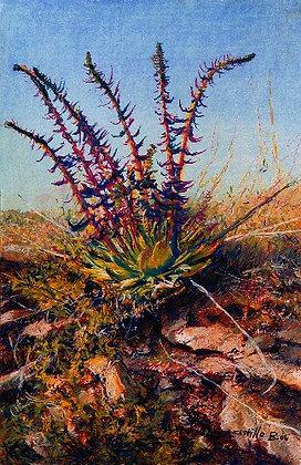 Desert Plant - 9709