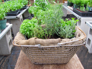 Mixed herb planter
