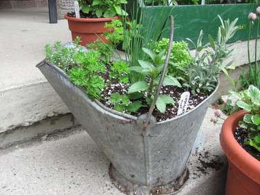 Herbs in a coal scuttle