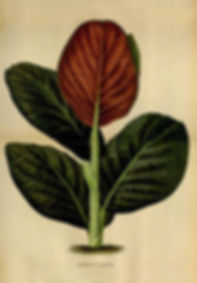 naturally balance the vagnal flora, bacterial vaginosis, vaginal odor, unplasant discharge
