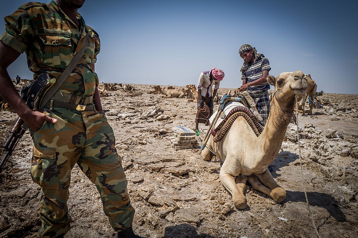 Load camels with salt in the Danakil Region