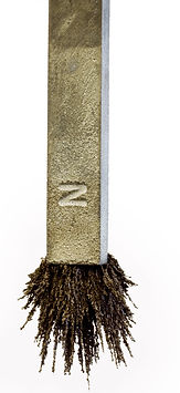 Magnet with iron filings