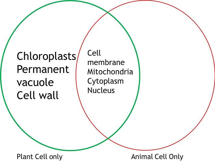 Venn diagram animal and plant cells