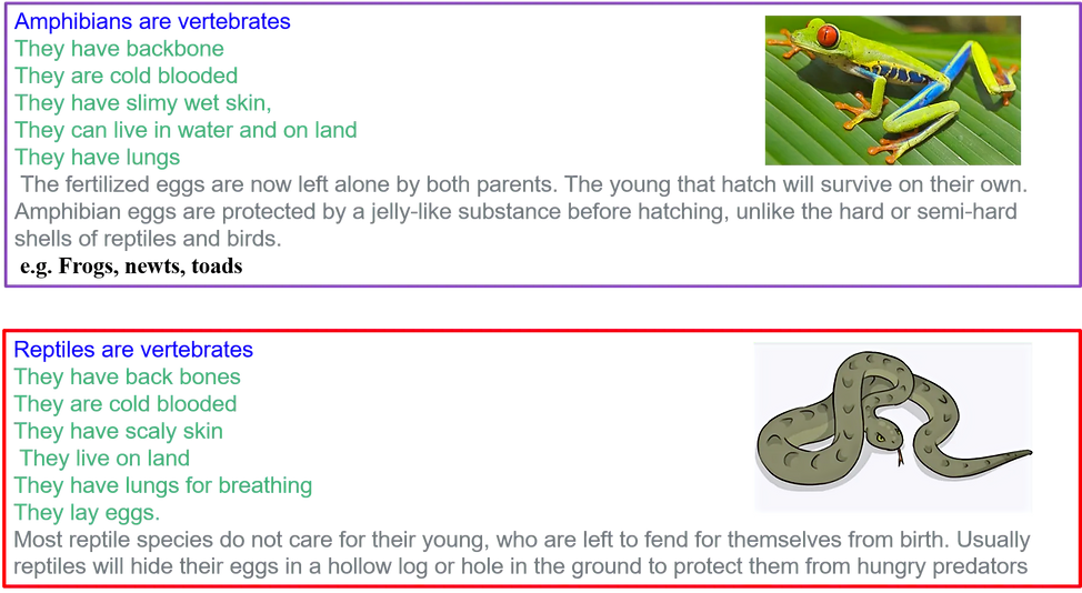 Reptiles and amphibians fact sheet