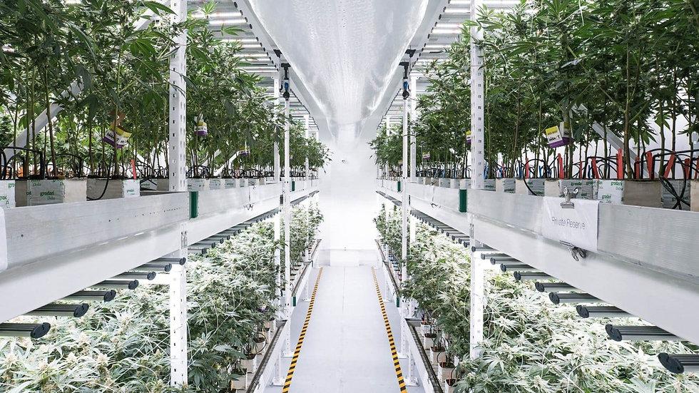 Cannabis-Vertical-Farm.jpg
