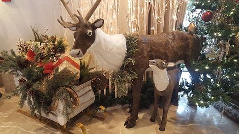LCR deer.jpg