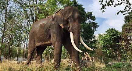 Sappraiwan's Tongtang The Tusker