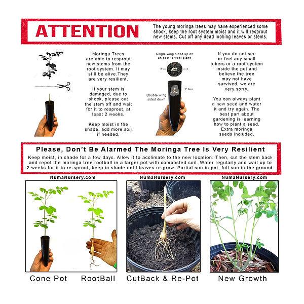 attention-do-not-be-alarmed-2-2.jpg