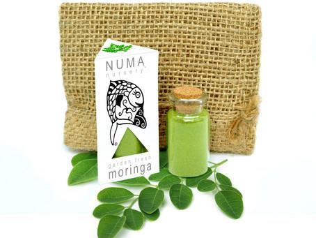 Moringa Benefits and Your Health