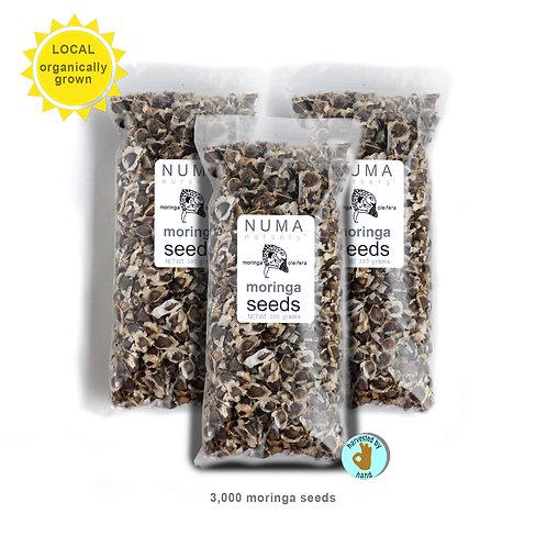 3,000 Moringa Seeds - Organic | Florida Grown