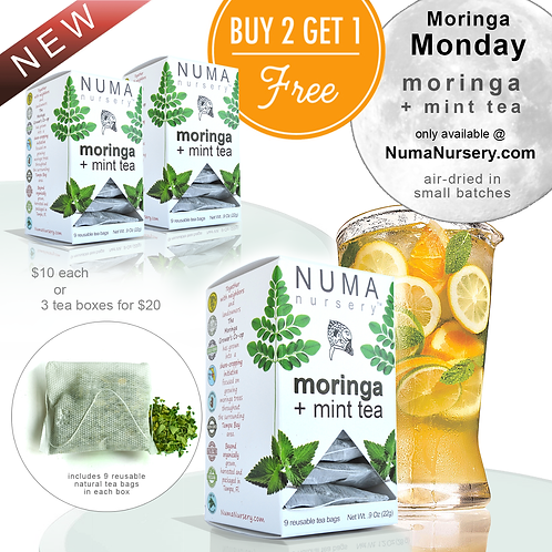 moringa + mint tea 9ct. 22g | buy 2 get 1 free
