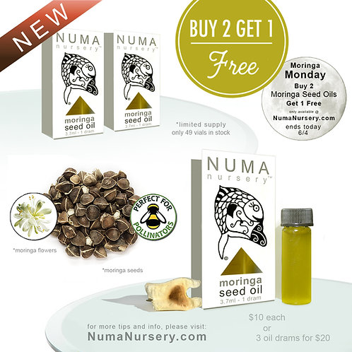 Moringa Seed Oil | Buy 2 get 1 Free
