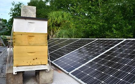 rooftop-beekeeping-2-4.jpg