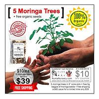 numa-adopt-a-moringa-tree-1.jpg