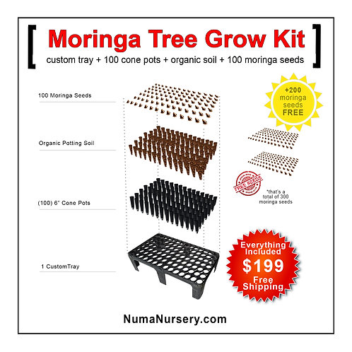 Moringa Tree Grow Kit