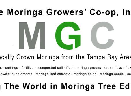 Make $100,000 Growing Moringa Trees