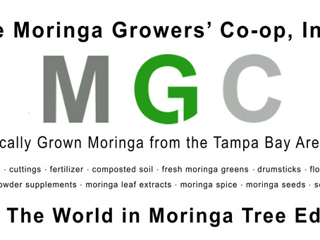 Make $100,000 Growing Moringa Trees