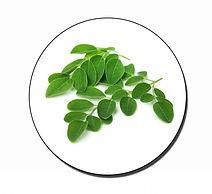 Moringa-leaf.jpg