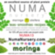 Numa-Coupon-Code-NUMA13.jpg