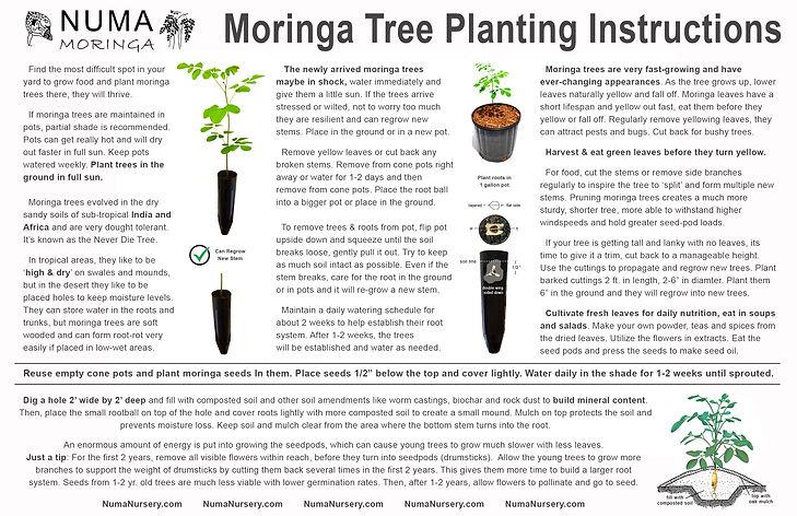 moringa-tree-instructions-2021.jpg
