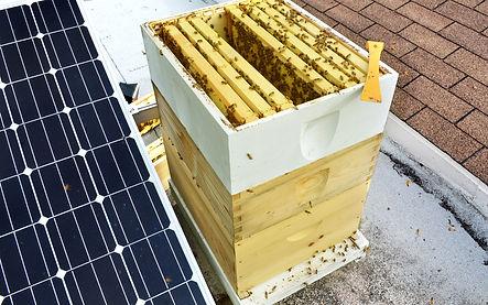 rooftop-beekeeping-2-1.jpg