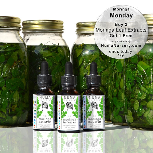Moringa Leaf Extracts | Buy 2 Get 1 Free