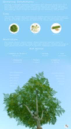 Moringa-INFO-bottom.jpg