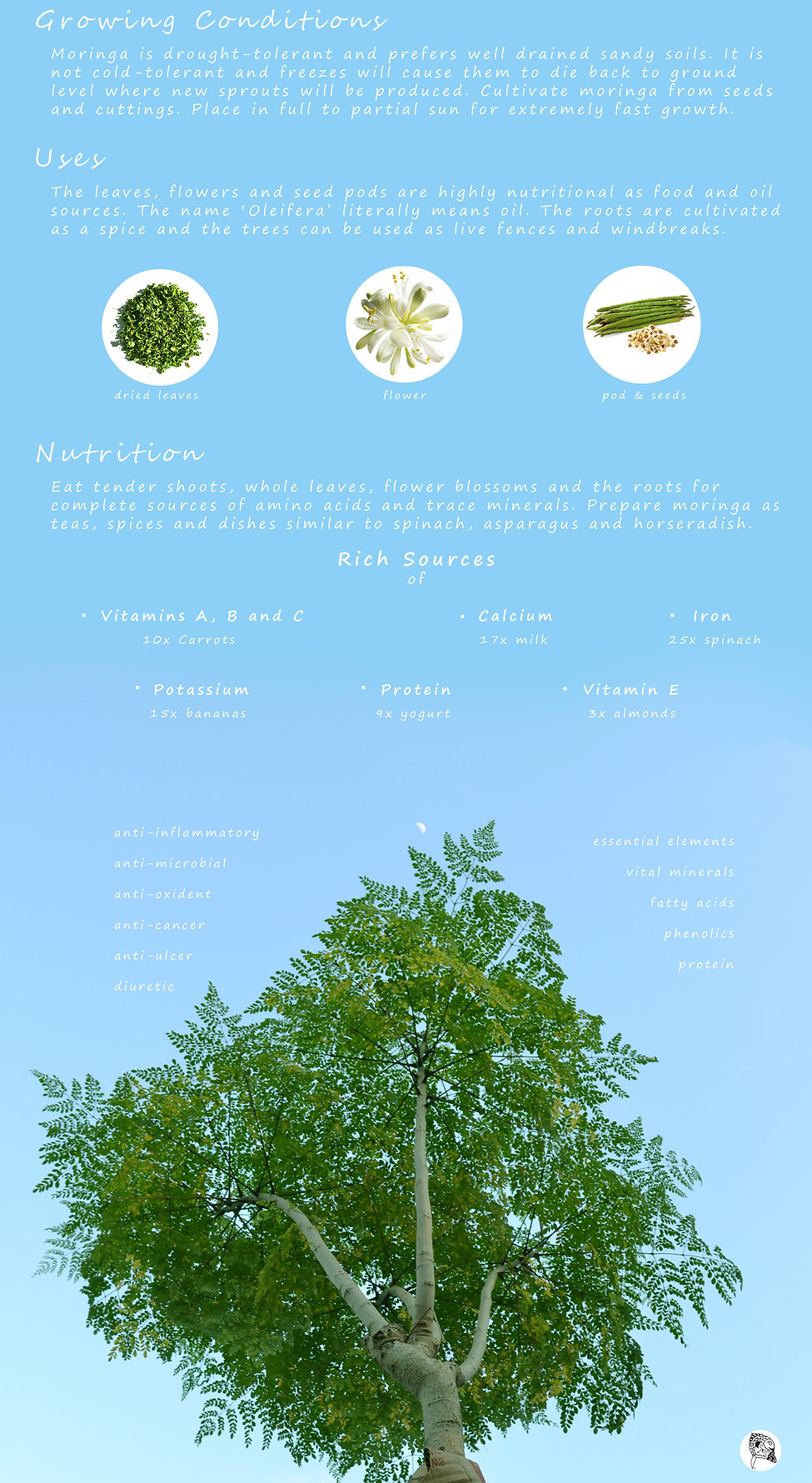 Moringa-INFO-bottom.jpg