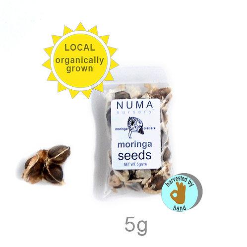 moringa seeds   5g
