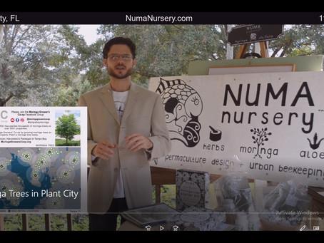 Moringa Trees in Plant City, FL