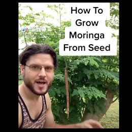 How To Grow Moringa From Seed?