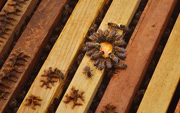 rooftop-beekeeping-3-1.jpg