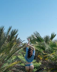 Cyprus palmtrees 03.jpg