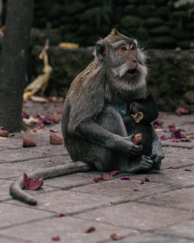 Monkey Forrest-1.jpg