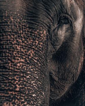 elephant-4.jpg