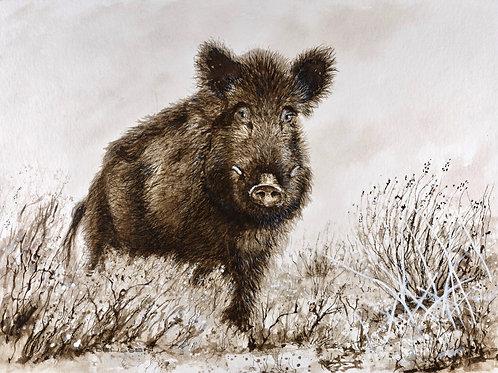 Wildschwein Kunstdruck