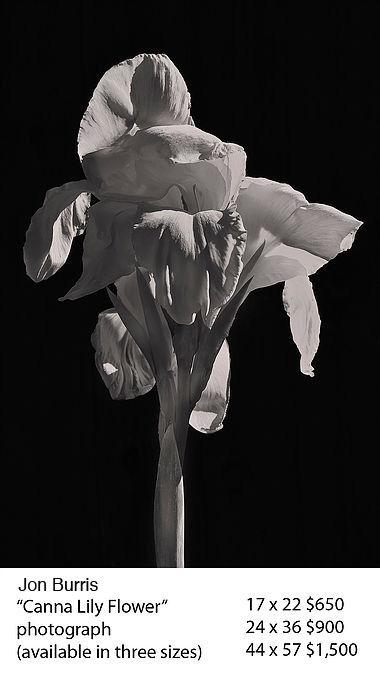 Canna Lily Flower copy.jpg