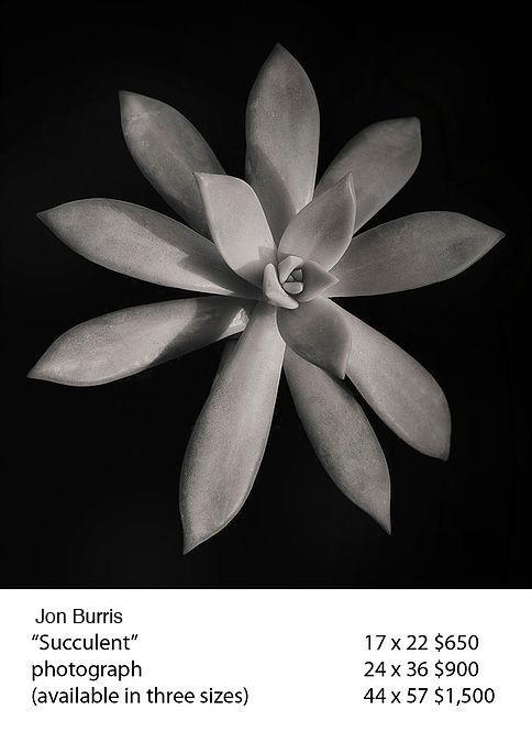 Succulent #1 copy.jpg