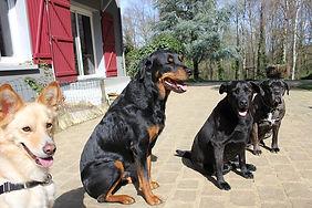 chiens Céline.jpg